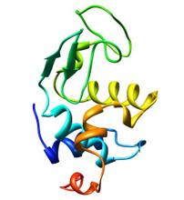 Lysozyme