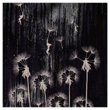 DANDELION DREAM - art print