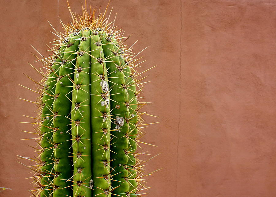 deserts cactus - photo #18