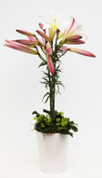 Christmas Lily Arrangement