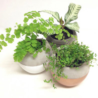 Plant in Cement Pot