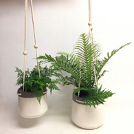 Plant in Hanging Pot
