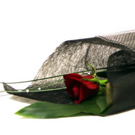 Valentine Rose beautifully wrapped.