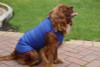 Step in waterproof dog coat blue
