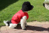Step in waterproof dog coat red