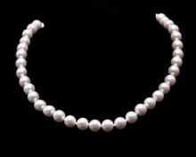 Single Strand White Pearl Necklace (8MM)