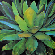 Agave - Jillian David Design