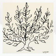 Matisse Le Buisson