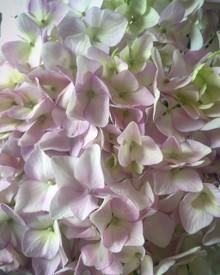 Spring Flower Workshop