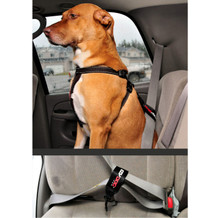 Duke sitting comfortably in the car with an EzyDog Seat Belt Restraint