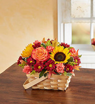 Fields of Europe for Fall Basket 2017