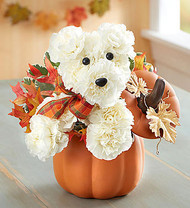 Kiwanis a-DOG-able for Fall