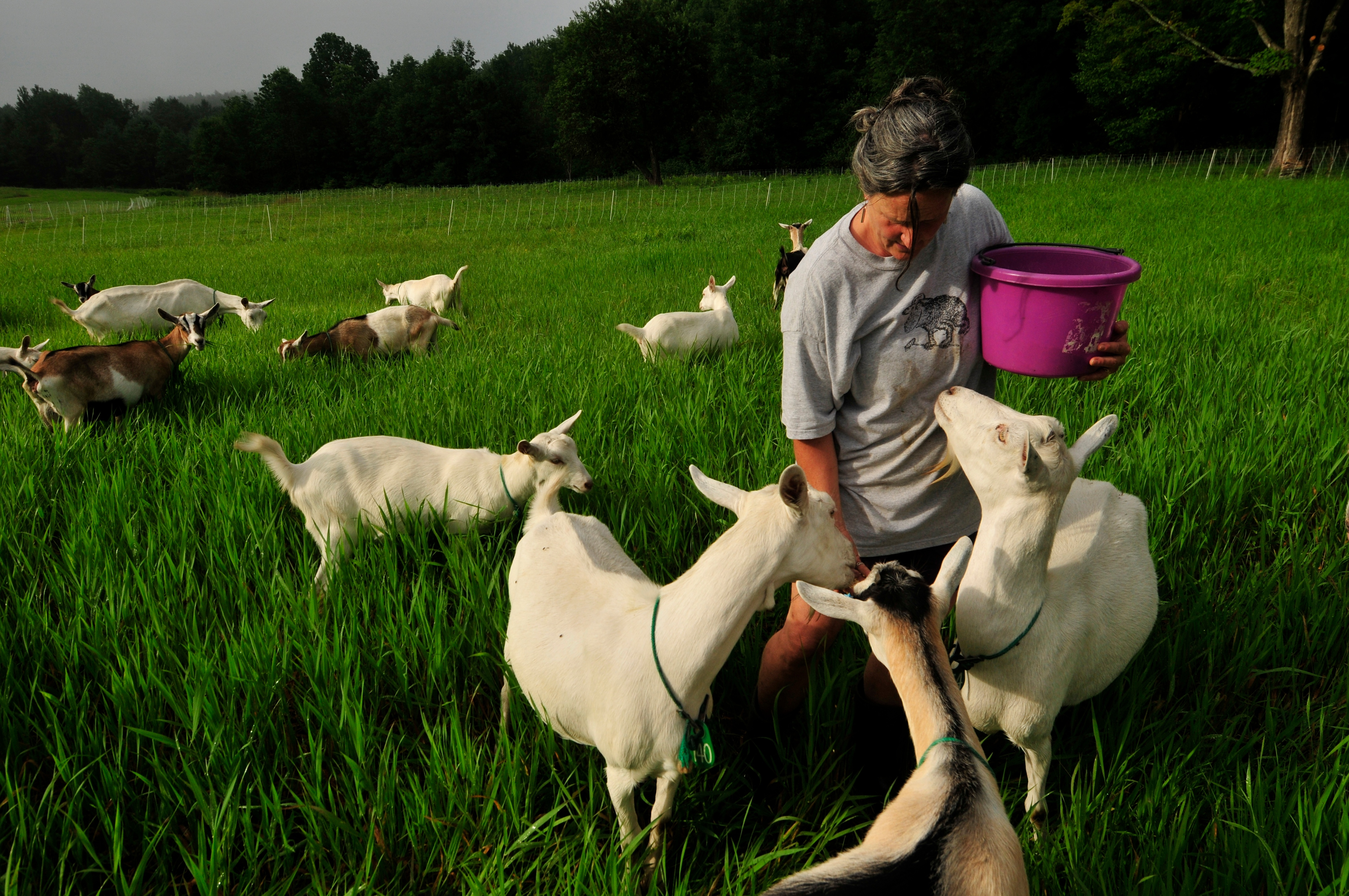 judith-feeding-goats-in-pasture.jpg