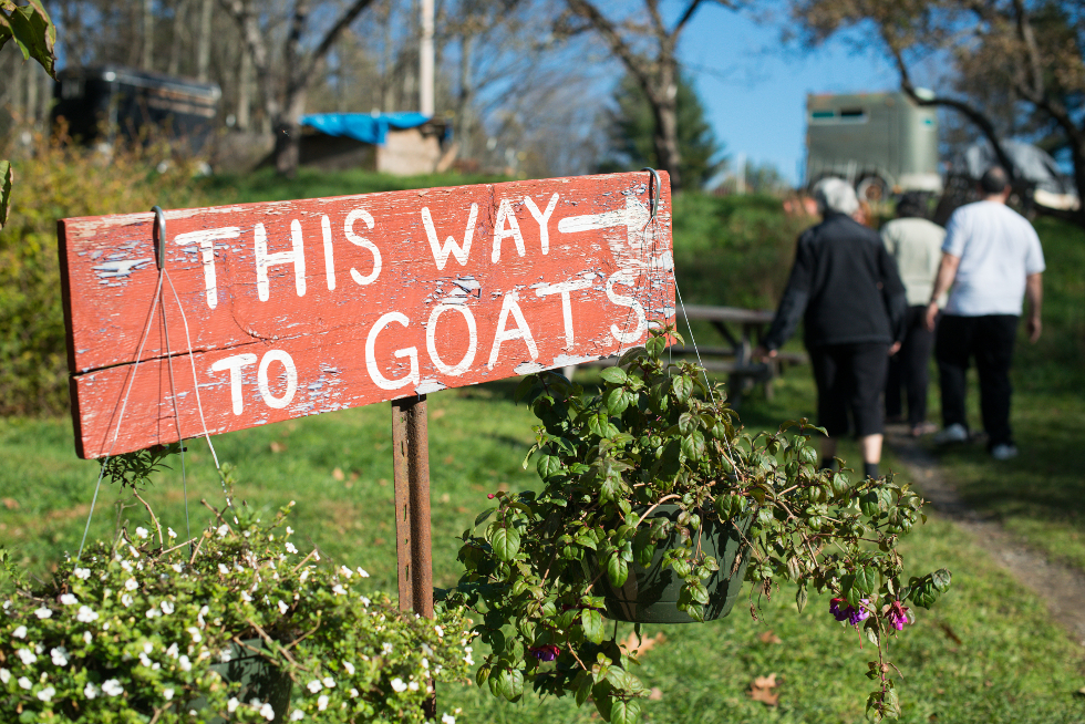 this-way-to-goats-980-website.jpg