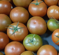 Tomato Spanish- 500g *Certified Chemical Free*