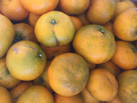 *Direct From Grower* Grap-erines- 1kg (Looks like a Mandarin-Tastes Like Red Grapefruit. Delicious!)