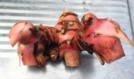 Galangal- 150g *Locally Grown- Chemical Free*