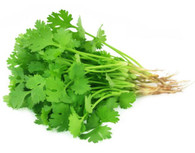 Herb CORIANDER- Bunch *Chemical Free. Aquaponic*