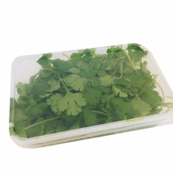 Micro Greens Coriander *Great Value. Local. Chemical Free*