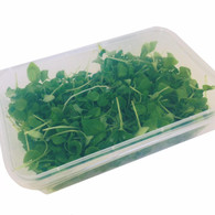 Micro Greens Basil *Great Value. Local. Chemical Free*