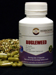 Bugleweed Loose Herb, Powder or Capsules @ Herbosophy