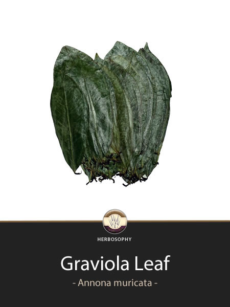 Dried Graviola Leaf Tea