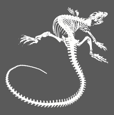 image-free-vector-freebie-lizard-skeleton-tail