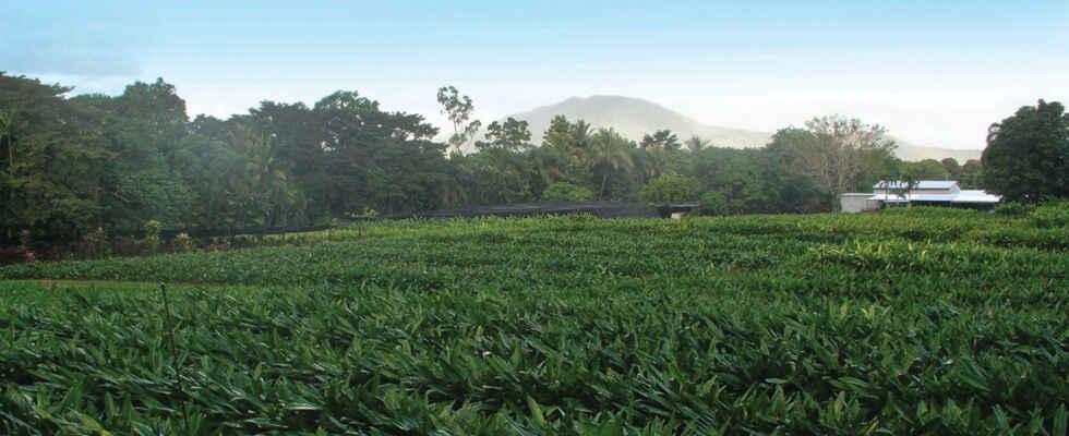 Tropical Blooms Farm