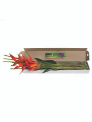 Mixed Tropical Box - 3 (shipping included)