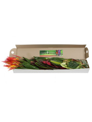 Mixed Tropical Box - 8 (shipping included)