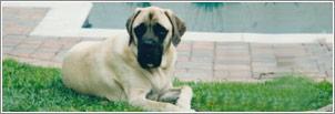 Meet Bosco
