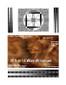 3D Fake Sonogram 9 to 12 Weeks