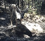 Tag-Out Mineral Supplement for Whitetail Deer