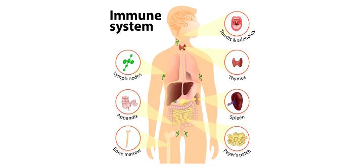 immunesystem.jpg