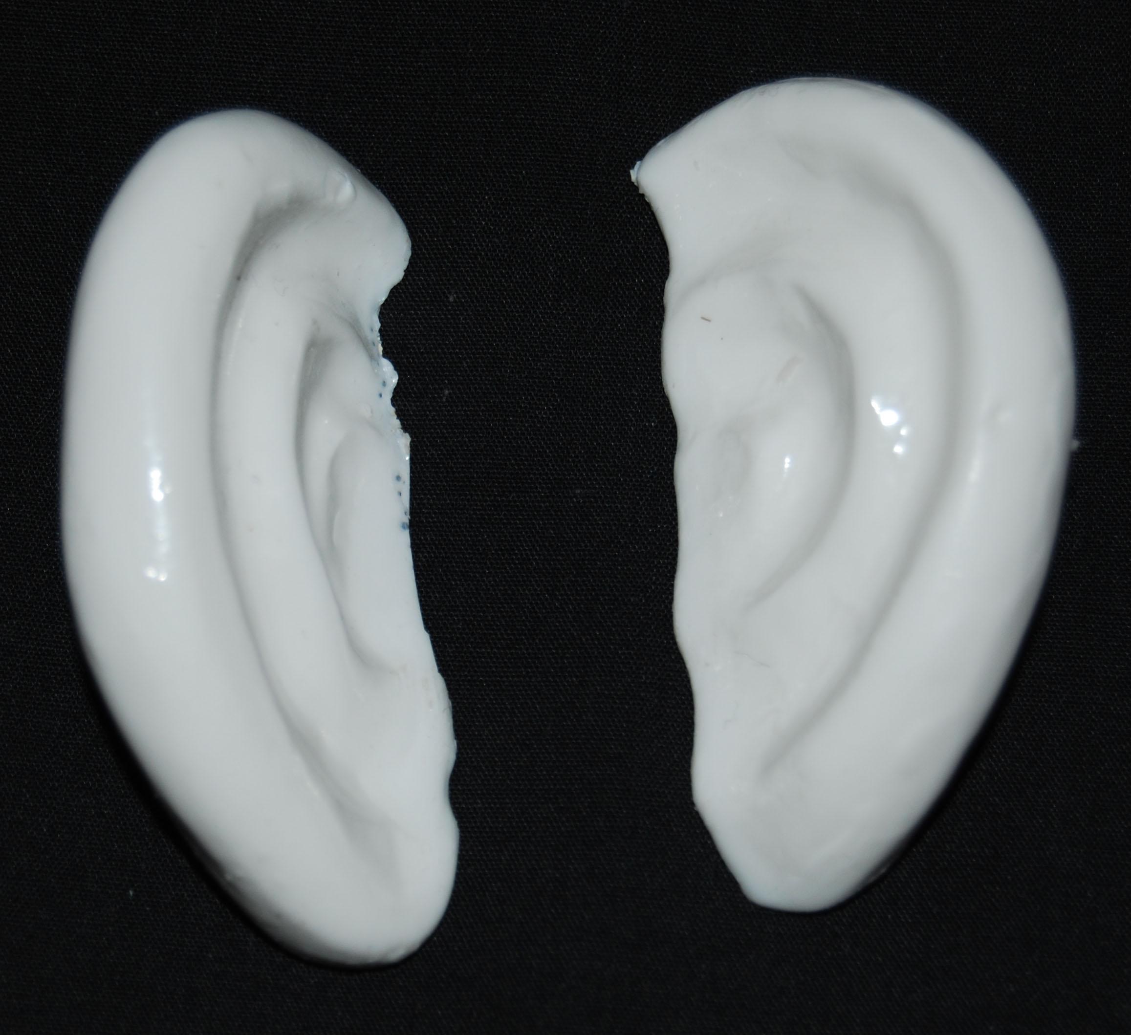 ears-3t-b-1.jpg