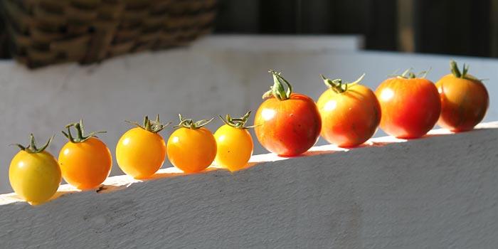 tigrella heirloom tomatoes