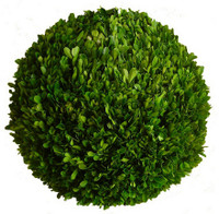 Preserved Boxwood Ball