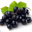 Blackcurrant (Hangsen) E-liquid