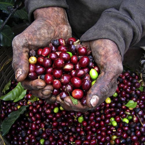 rainforestalliancebeans.jpg