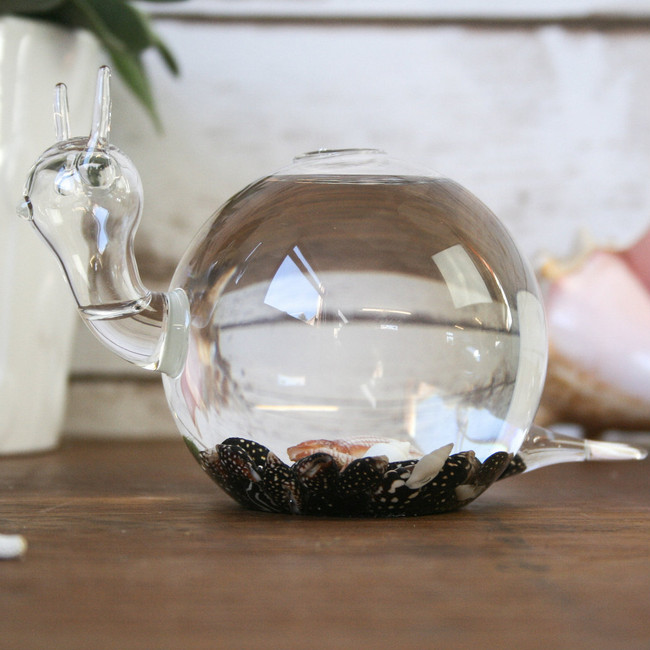 Terrarium,  Snail Vase with moss ball and shells