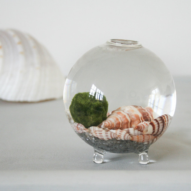 Terrarium, Hand Blown ball vase