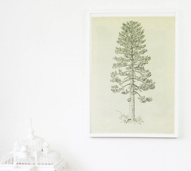 Vintage Double Sided Tree Print, Silver Fir