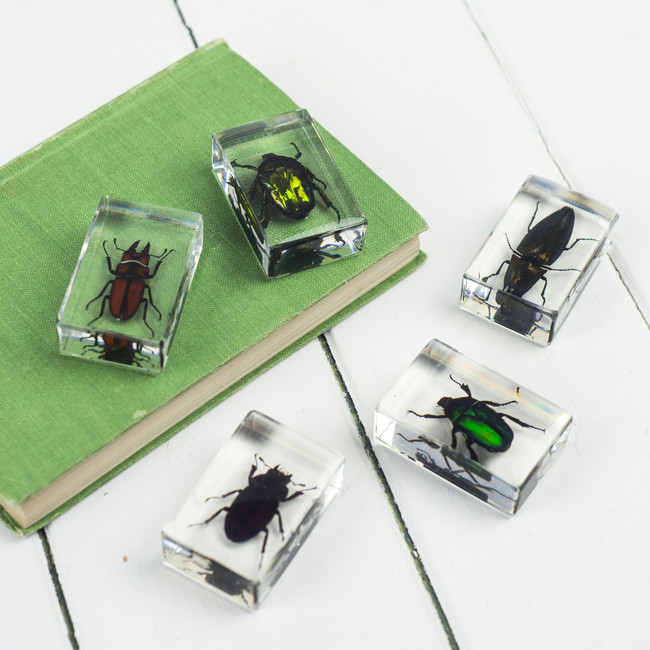 Insects In Resin, Set Of Five