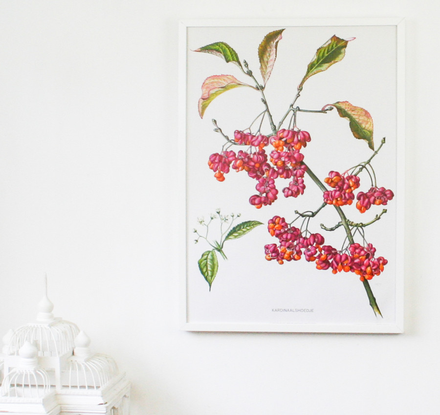 Vintage Botanical Print on Linen, Cardinals Hat