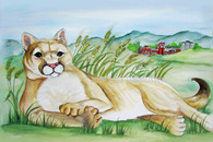 Cougar lying in the Palouse   framed  18 x24  $185