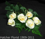 A cream rose by Denmar our Sierra Eco farm in Ecuador. Great for any occasion.