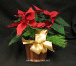 """What would Christmas be with out an Ontario grown poinsettia? Bob and Doug Hatcher have made a special effort to get great plants at a stunning price. 5 days only GTA only!!! Limit two per customer. send one today on Nationial Poinsettia day Dec 10th. Price good  Dec 03th.through December 12th 2011.  """"Tough people last, tough times don't. """""""