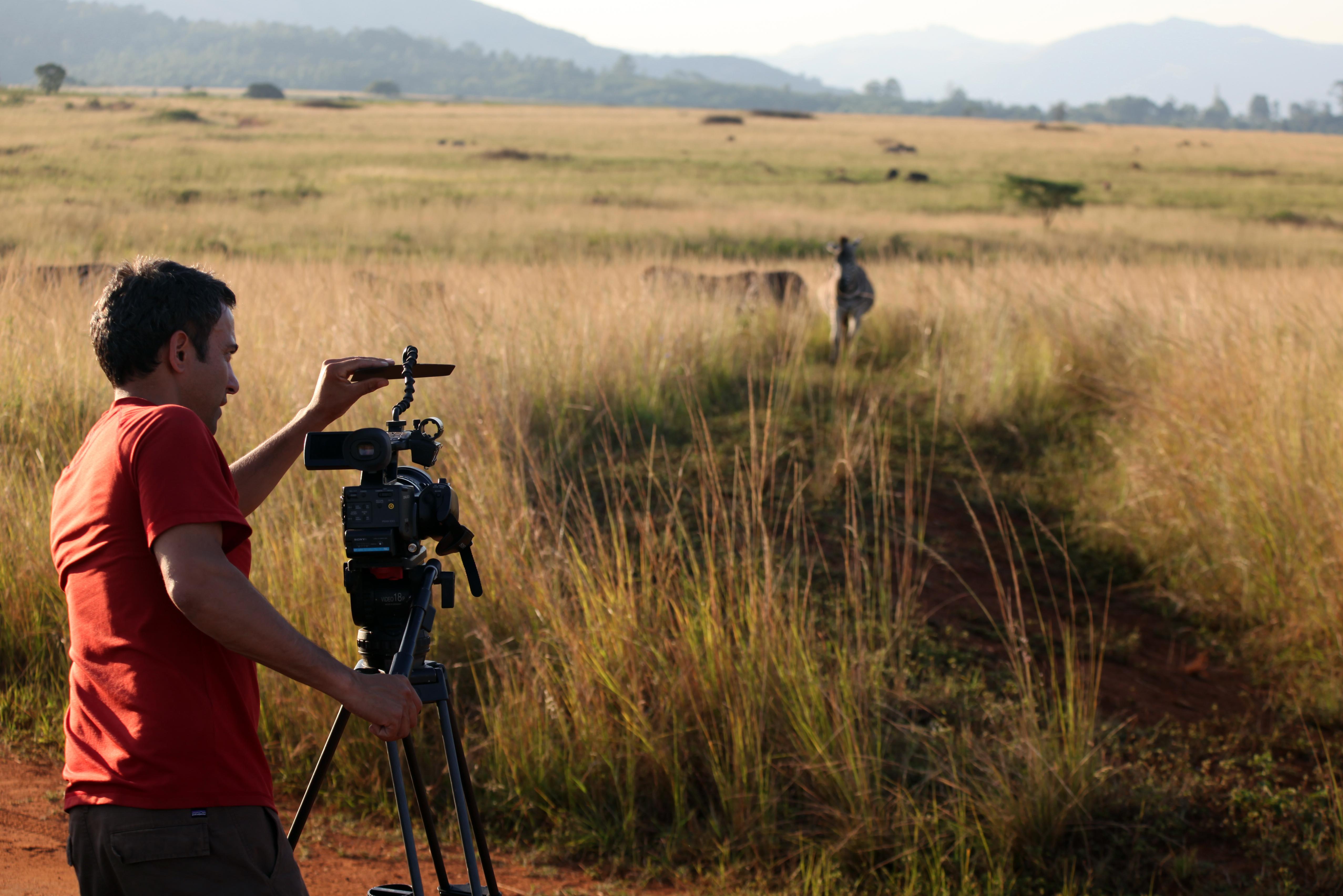 COMPACT lens shade, John Mans, Africa zebra