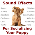 City Sounds for Imprinting/Socializing Your Puppy