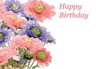 Happy Birthday - Scabious